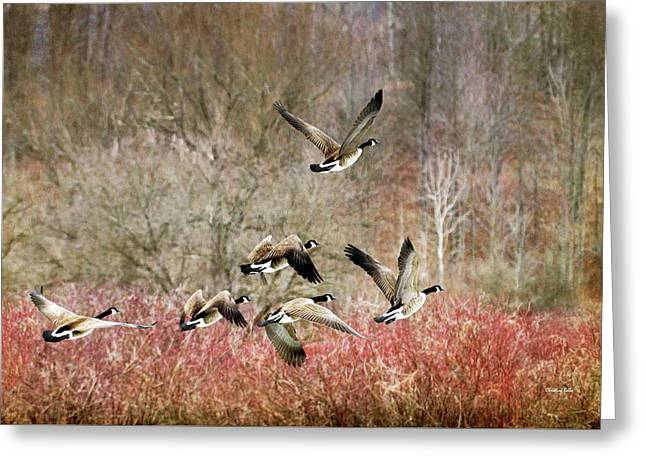 Canada Geese In Flight Greeting Card