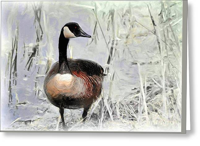 Canada Goose Greeting Card