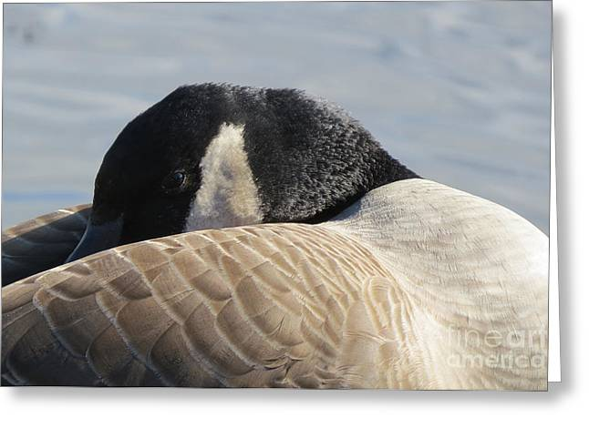 Canada Goose Head Greeting Card by Mary Mikawoz
