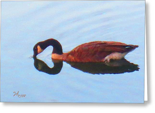 Canada Goose On Clear Lake Greeting Card