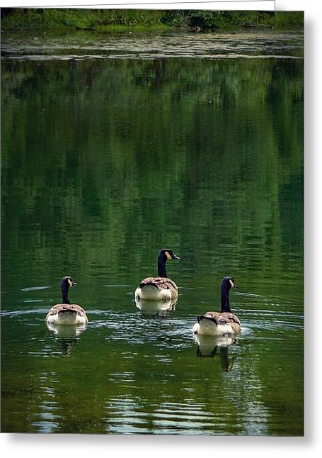 Canada Goose Trifecta Greeting Card