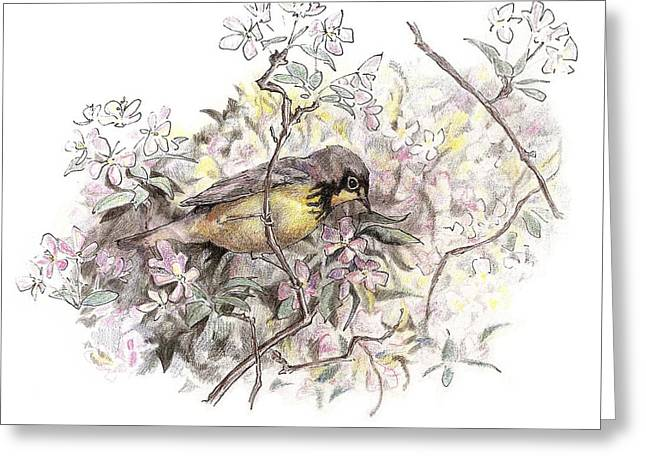 Canada Warbler Greeting Card