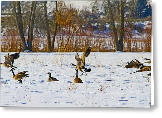 Canadian Geese At Sunrise IIi Greeting Card