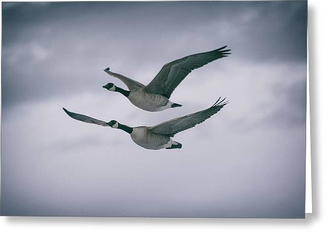 Greeting Card featuring the photograph Canadian Geese In Flight by Jason Coward