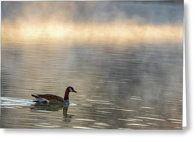 Canadian Goose In Misty Lake Greeting Card