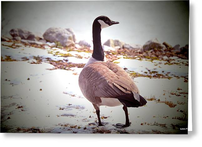 Canadian Goose Snow Stroll Greeting Card