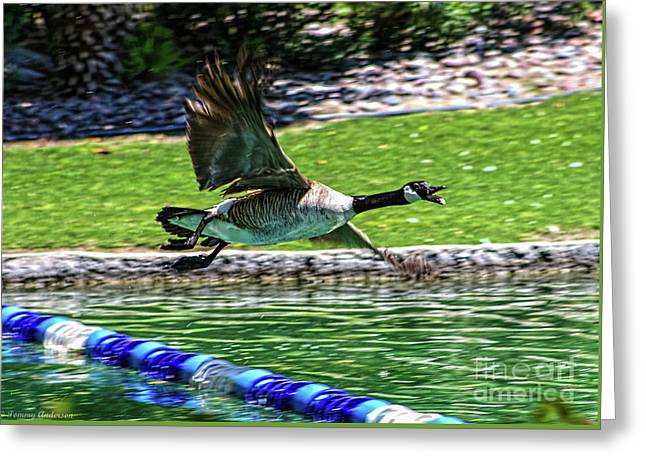 Canadian Goose Greeting Card by Tommy Anderson