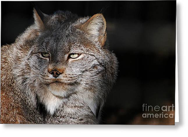 Greeting Card featuring the photograph Canadian Lynx  20130107_57 by Tina Hopkins