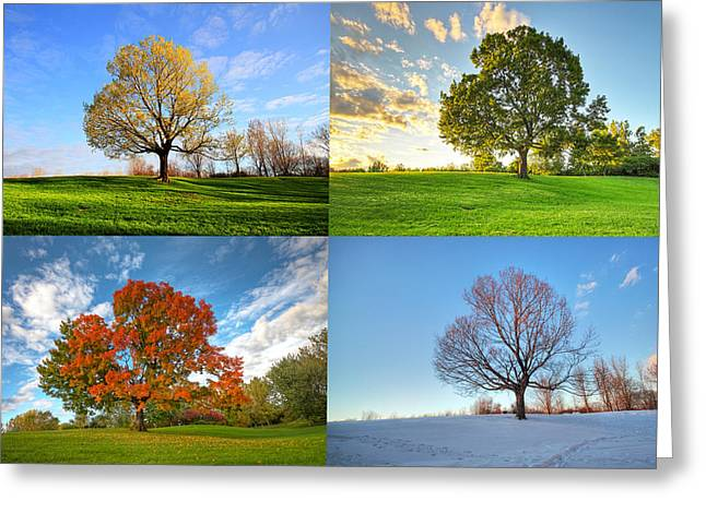 Four Aces Greeting Cards - Canadian seasons Greeting Card by Mircea Costina Photography