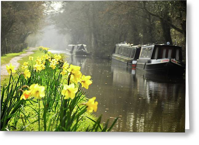 Canalside Daffodils Greeting Card