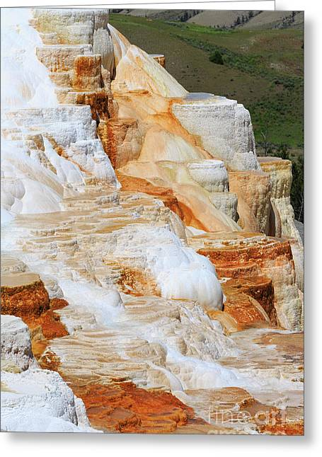 Canary Spring Mammoth Hot Springs Upper Terraces Greeting Card by Louise Heusinkveld