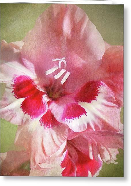 Candy Cane Gladiola Greeting Card
