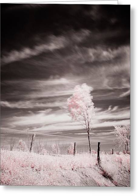 Candy Cotton Dream Greeting Card by Lea Seguin