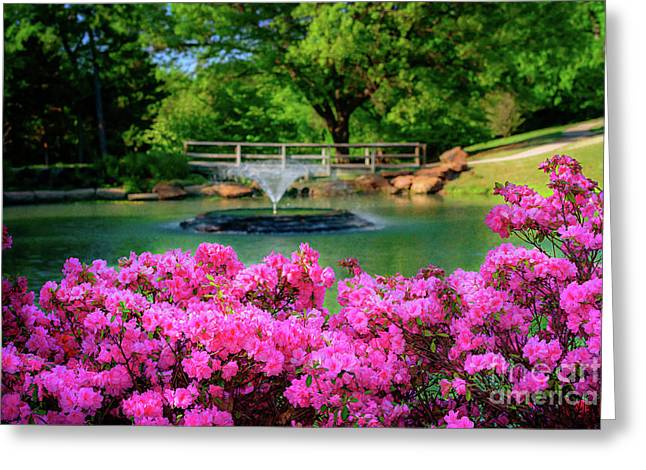 Candy Pink Azaleas At The Azalea Festival Greeting Card by Tamyra Ayles