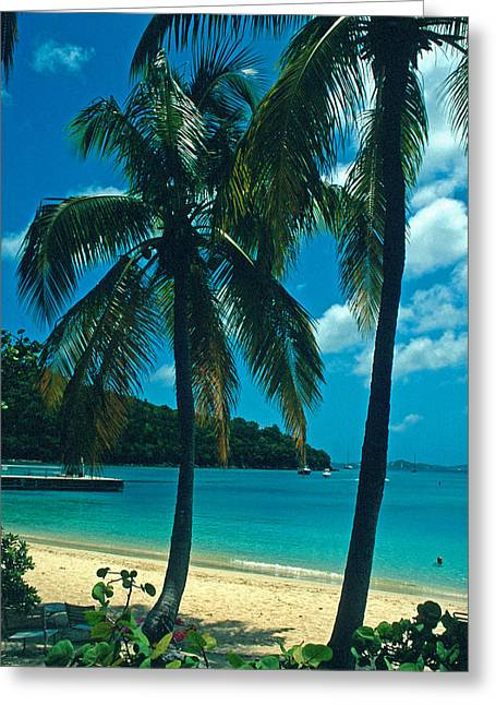 Caneel Bay Palms Greeting Card by Kathy Yates