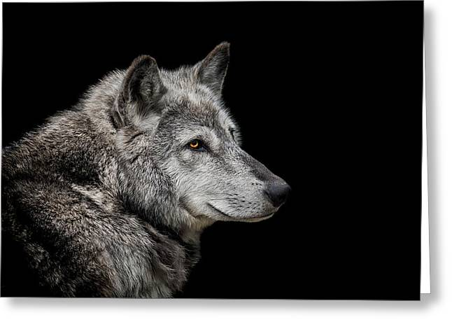Canis Lupus Greeting Card by Paul Neville