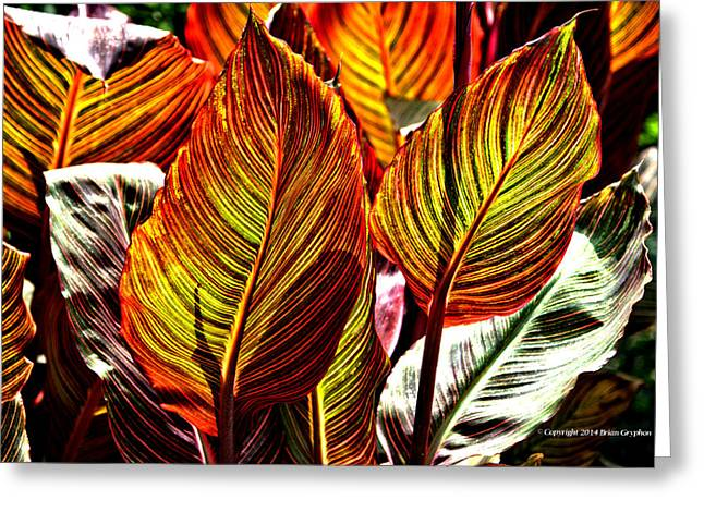 Greeting Card featuring the photograph Canna 26106hdr by Brian Gryphon
