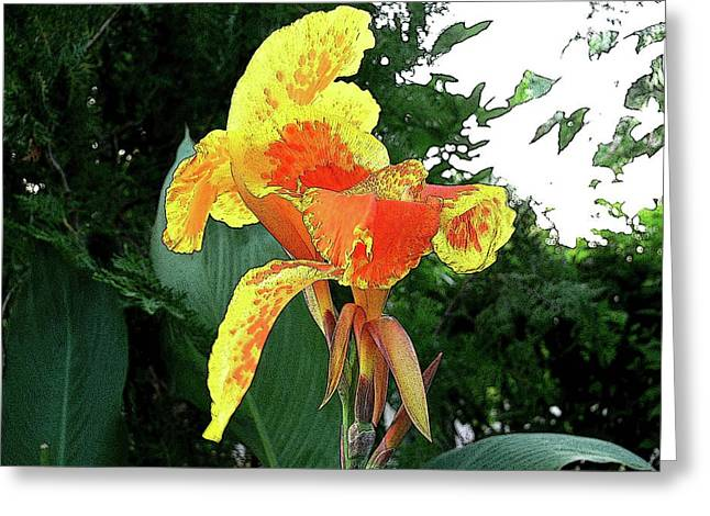 Canna 3 Greeting Card by Padamvir Singh