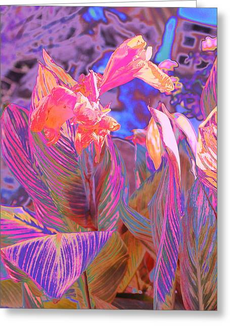 Canna Abstract 9 Greeting Card by M Diane Bonaparte