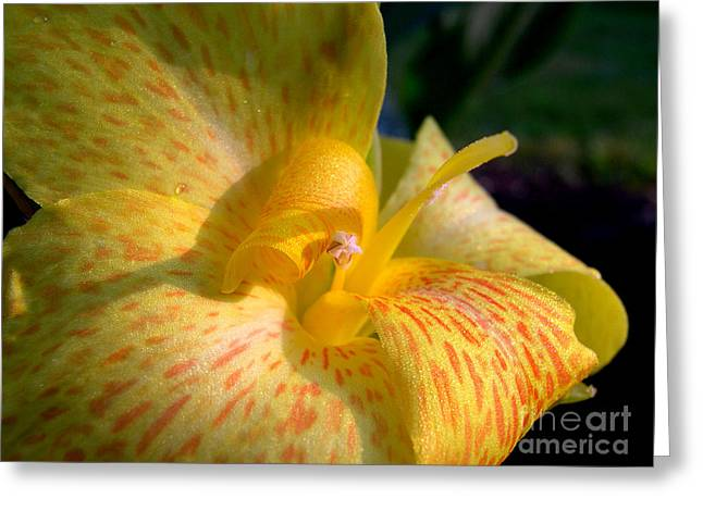 Canna Greeting Card by Addie Hocynec