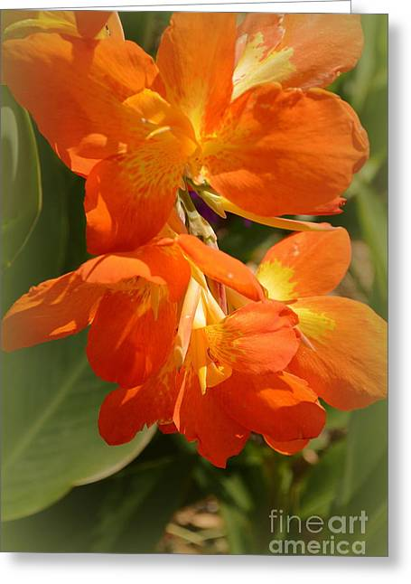 Canna Bloom Greeting Card by Linda Covino