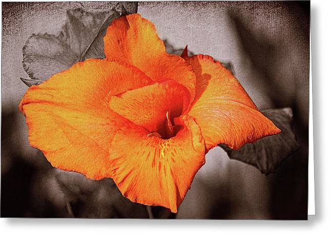 Canna Lily 1 Mission Bay Greeting Card by Kenneth Roberts