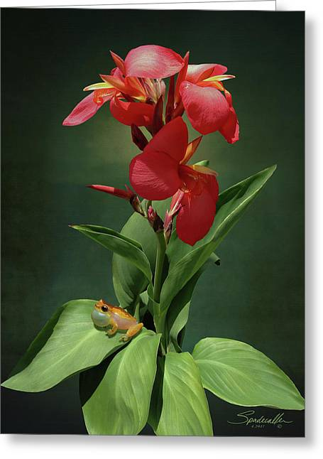 Canna Lily And Hourglass Tree Frog Greeting Card