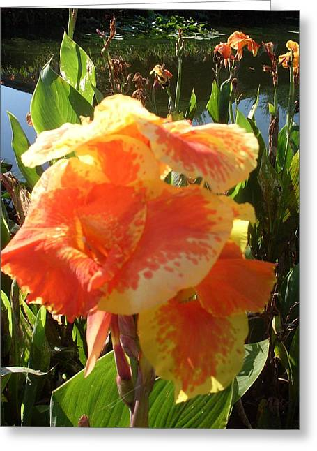 Canna Lily Light Greeting Card by Warren Thompson