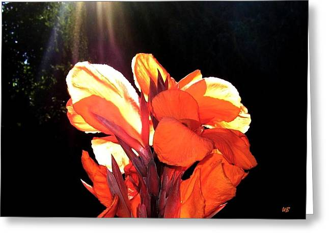 Canna Lily Greeting Card by Will Borden