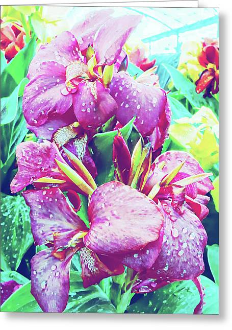 Canna Lily With Water Drops Greeting Card by Dorothy Berry-Lound