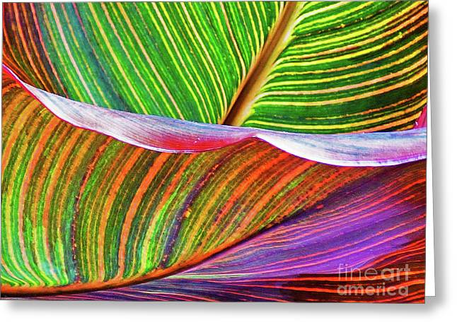Canna Ripples 2 Greeting Card by Sharon Eng