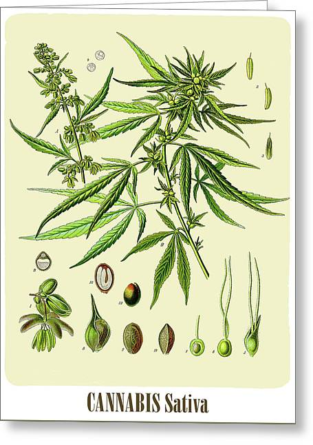 Cannabis Greeting Card by Unknown