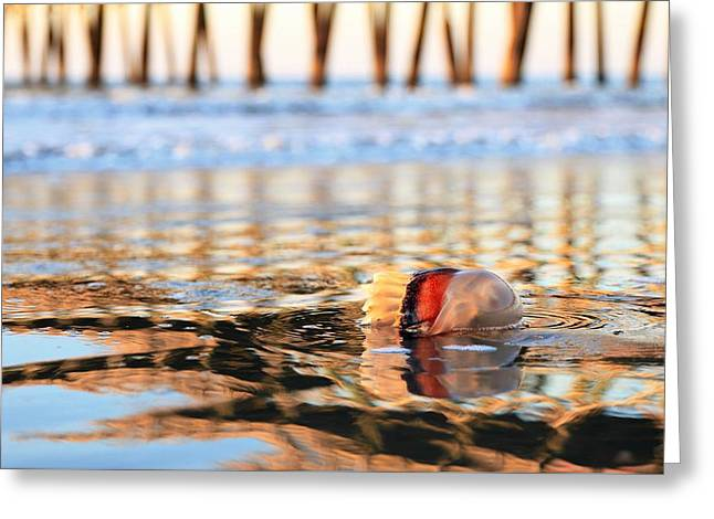 Cannonball Jellyfish Beached Greeting Card