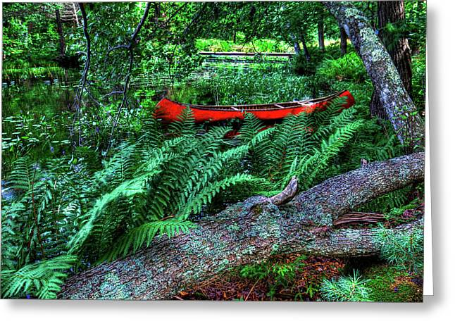 Canoe Among The Ferns Greeting Card