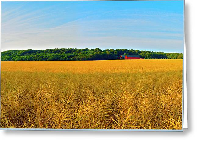 Canola Crop Greeting Card by Jan W Faul