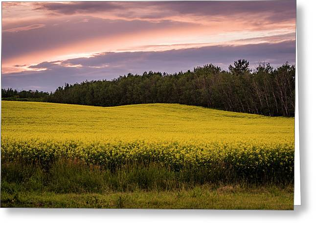 Greeting Card featuring the photograph Canola Crop Sunset by Darcy Michaelchuk