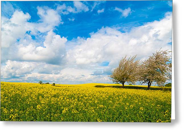 Canola Field Panorama Greeting Card by Amanda Elwell