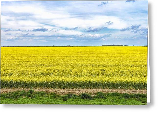 Canola Field - Photography Greeting Card by Ann Powell