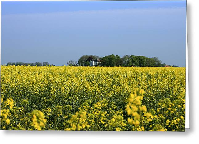 Golds Pyrography Greeting Cards - Canola Field Greeting Card by Stefan Kuhn
