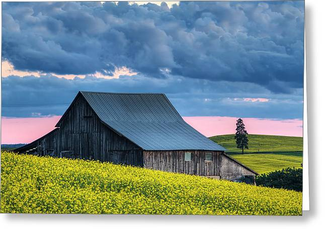 Canola Sunset Greeting Card by Mark Kiver