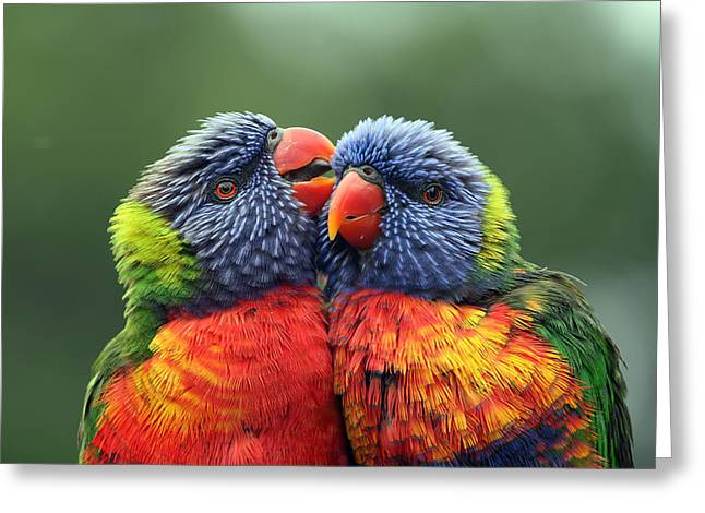 Canoodling In The Rain Greeting Card