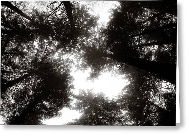 Canopy Greeting Card by Dave Bowman