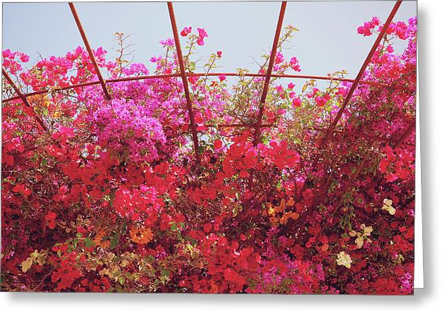 Canopy Of Color- Photography By Linda Woods Greeting Card