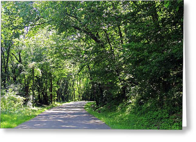 Greeting Card featuring the photograph Canopy Of Trees by Angela Murdock