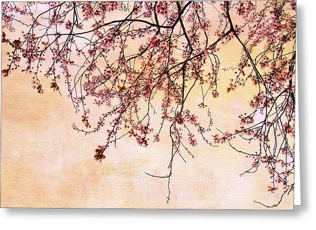 Cherry Blossoms Photographs Greeting Cards - Canopy Greeting Card by Rebecca Cozart