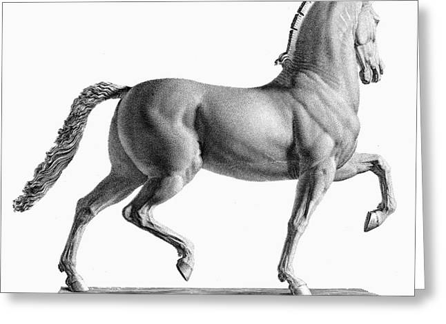 18th Century Greeting Cards - Canova: Horse Greeting Card by Granger
