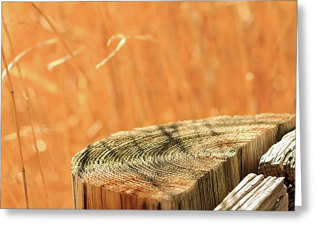 Cantigny Fence Post Greeting Card