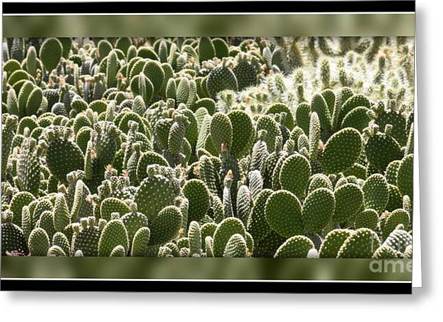 Canvas Of Cacti Greeting Card