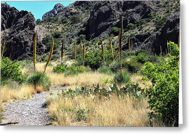 Canyon Springs Trail Greeting Card