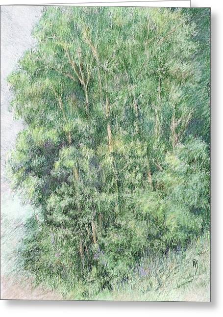 Canyon Trees Colorized Greeting Card